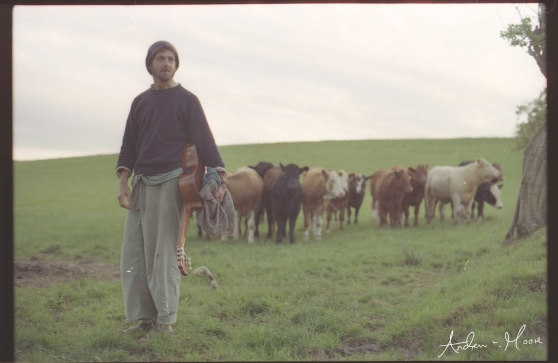 bob and cows
